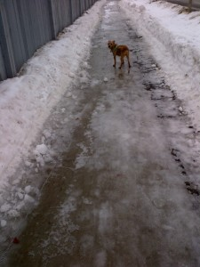 Take a look at that icy sidewalk!