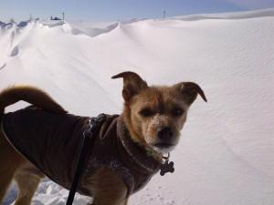 Friday's Arctic walk